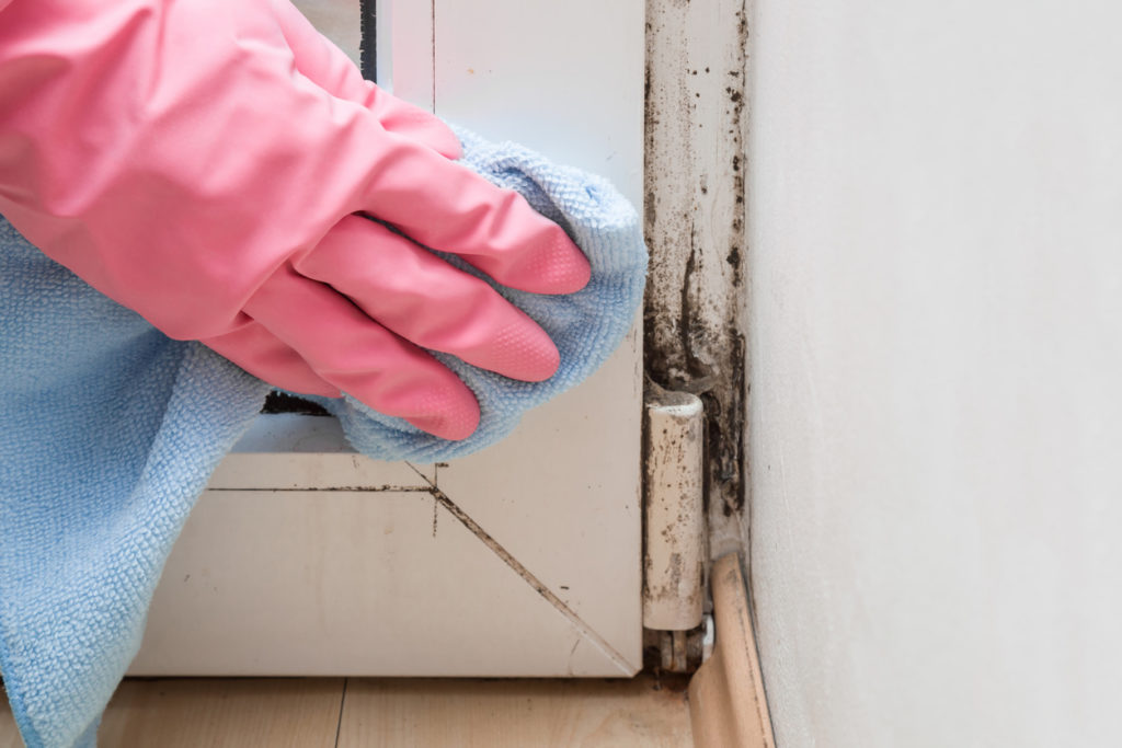 Reducing Mold in Home and Office