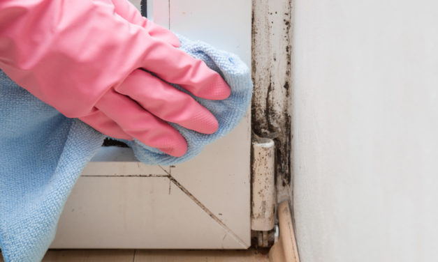 Tips for Reducing Mold in Your Home or Office