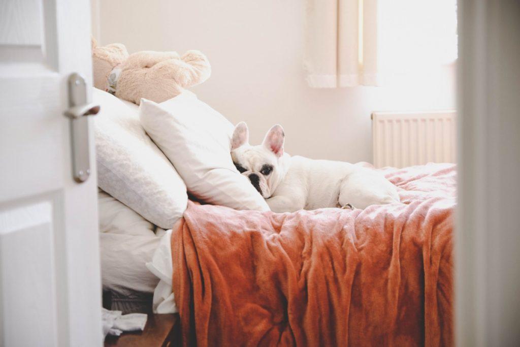 Dander in bedroom